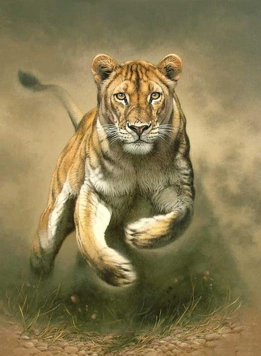 animal paintings wildlife animals easy drawings pencil peru painting lion animaux beginners caforio fabrizio croquis wild leopard determinate deviantart peintures